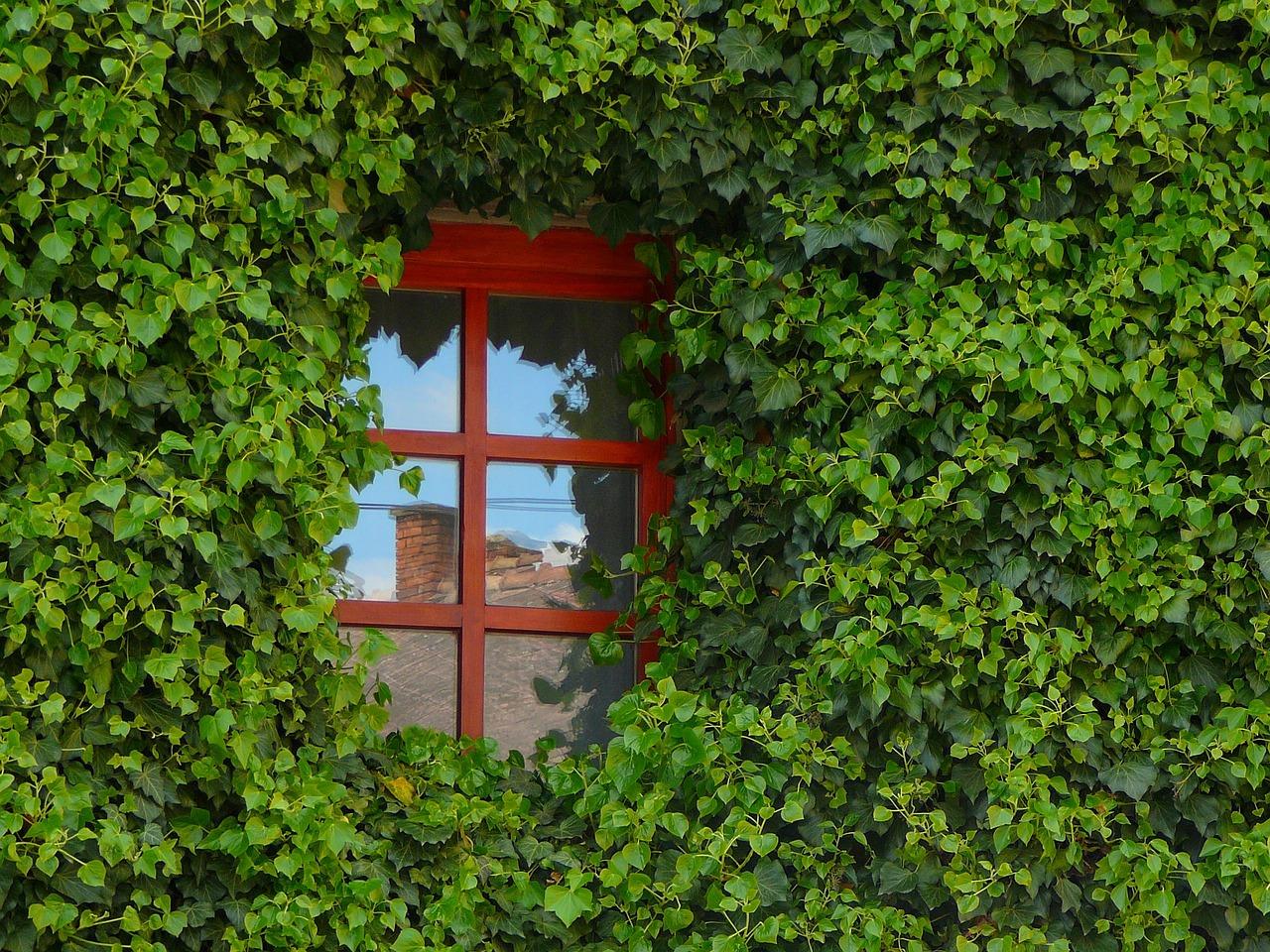 Des fenêtres en bois ou en alu : quelle préférence ?